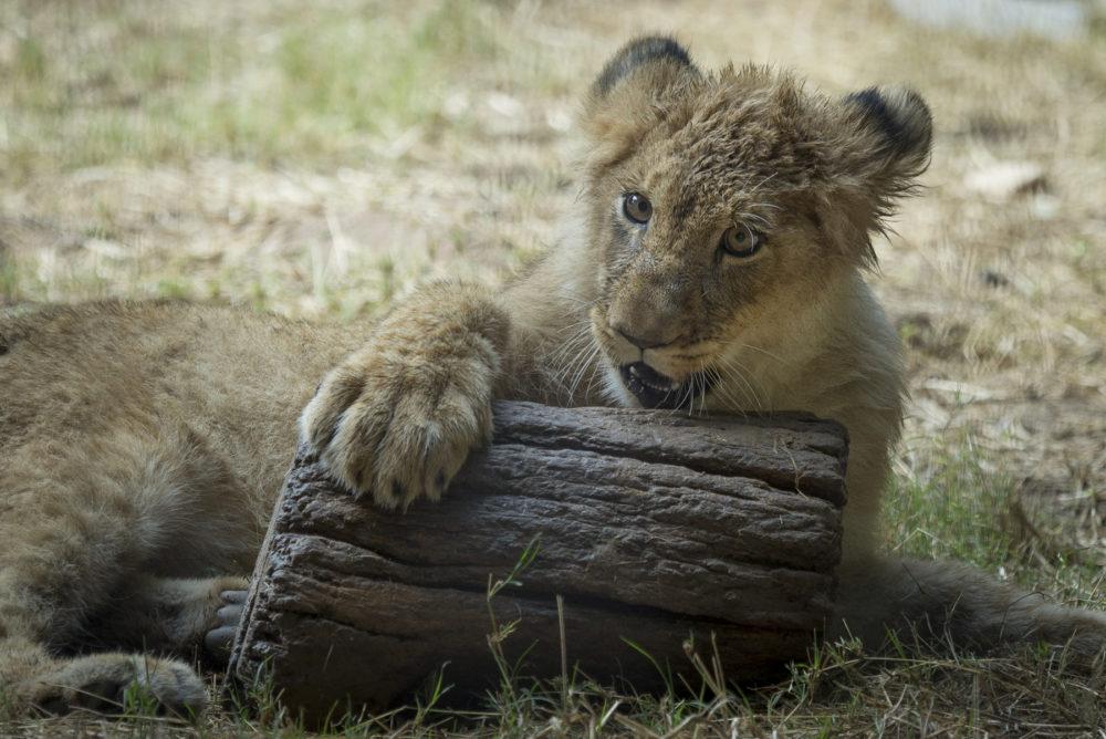 Photo credit Amy Horn - Arizona Wildlife World Zoo Photography Workshop