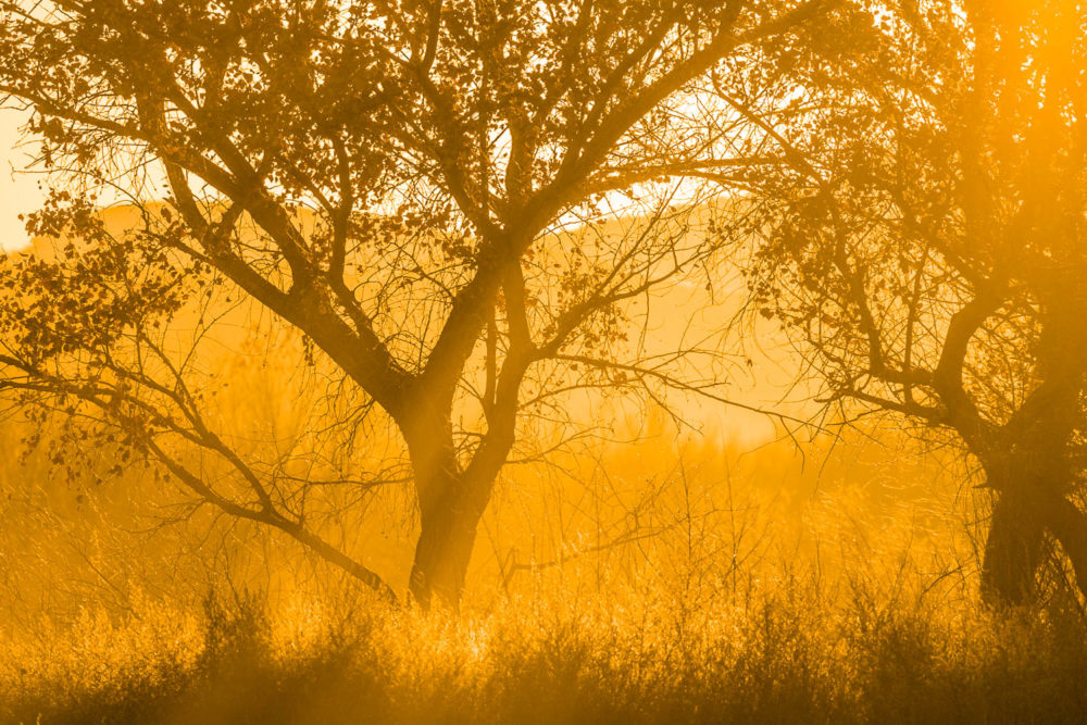 Photo credit Michael DeYoung - New Mexico Photography Sampler