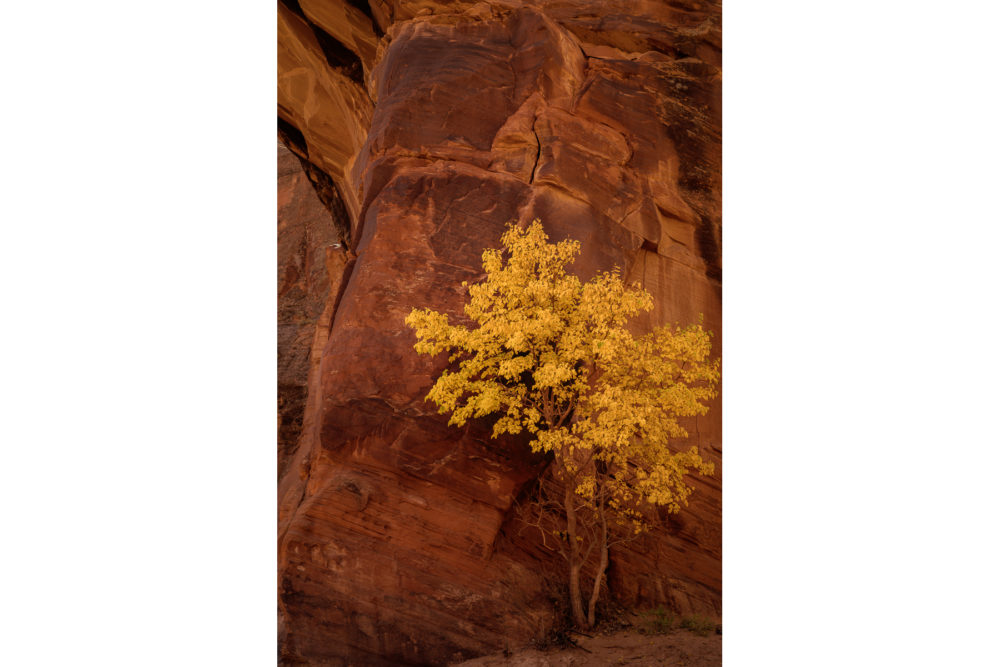 Photo credit Gary Helbing - Canyon de Chelly photo workshop