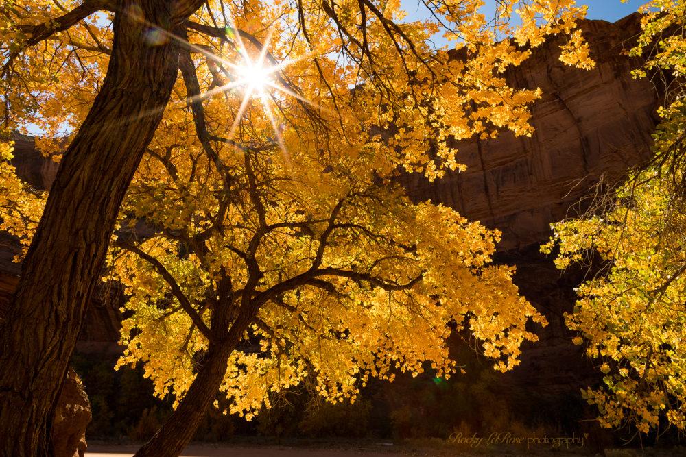 Photo credit Rocky LaRose - Canyon de Chelly photo workshop