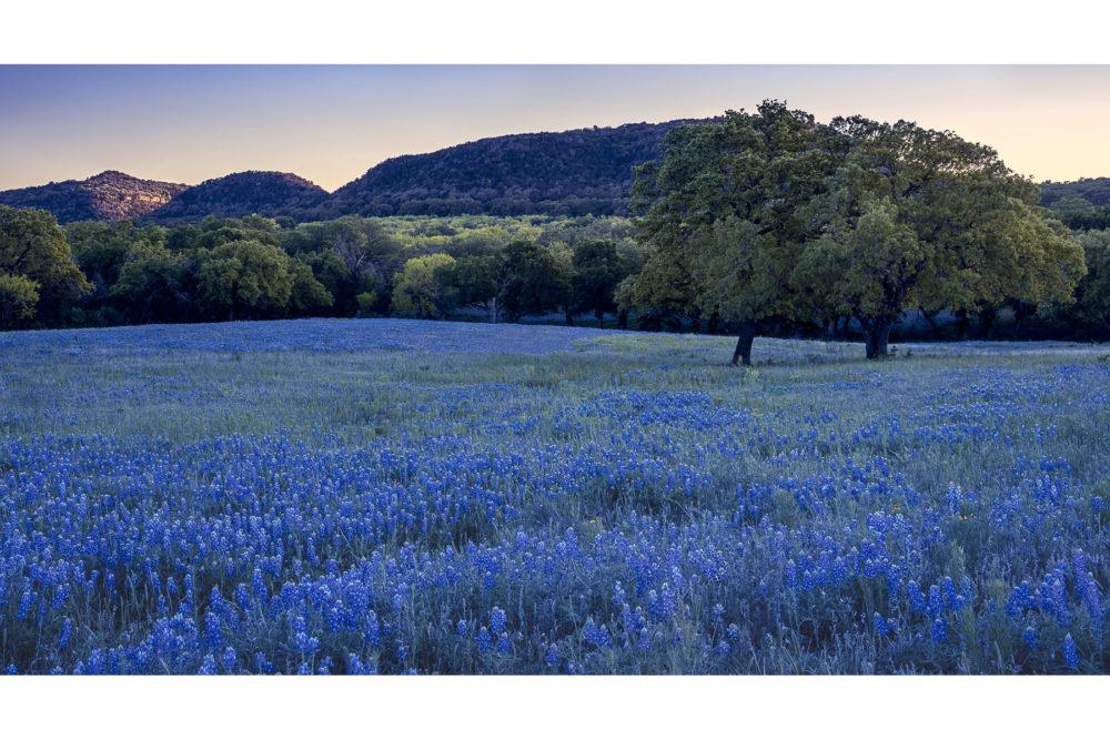 Photo credit Mark Sadoski - Texas Wildflowers