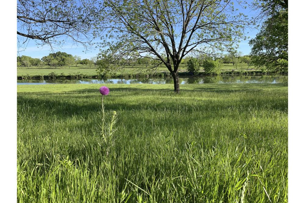 Photo credit Jeff Insel - Texas Wildflowers