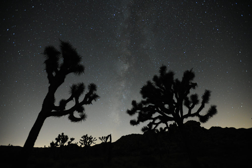 Photo credit Jack Jordan - Joshua Tree