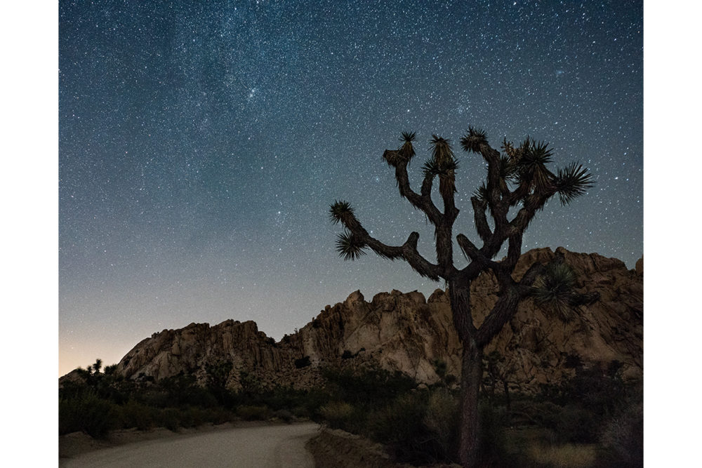 Photo credit Susan Snyder - Joshua Tree