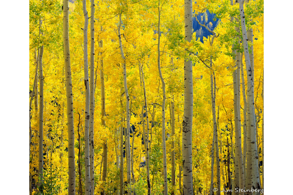 Photo credit Jim Steinberg - Fall in Colorado