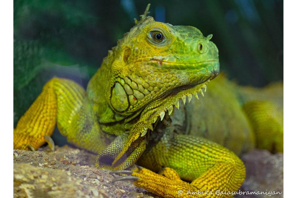 Photo credit Ambika Balasubramaniyan - Wildlife World Zoo