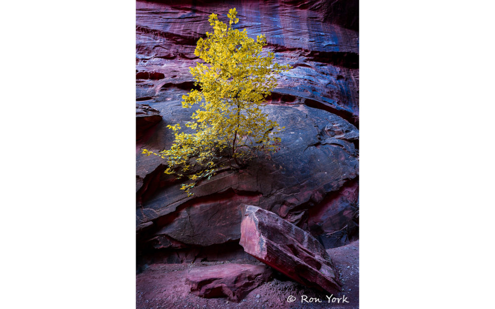 Photo credit Ron York - Escalante & Grand Staircase workshop