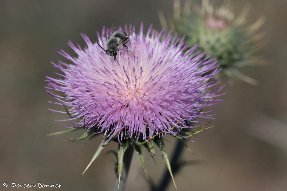 Photo credit Doreen Bonner - Macro Wildflowers