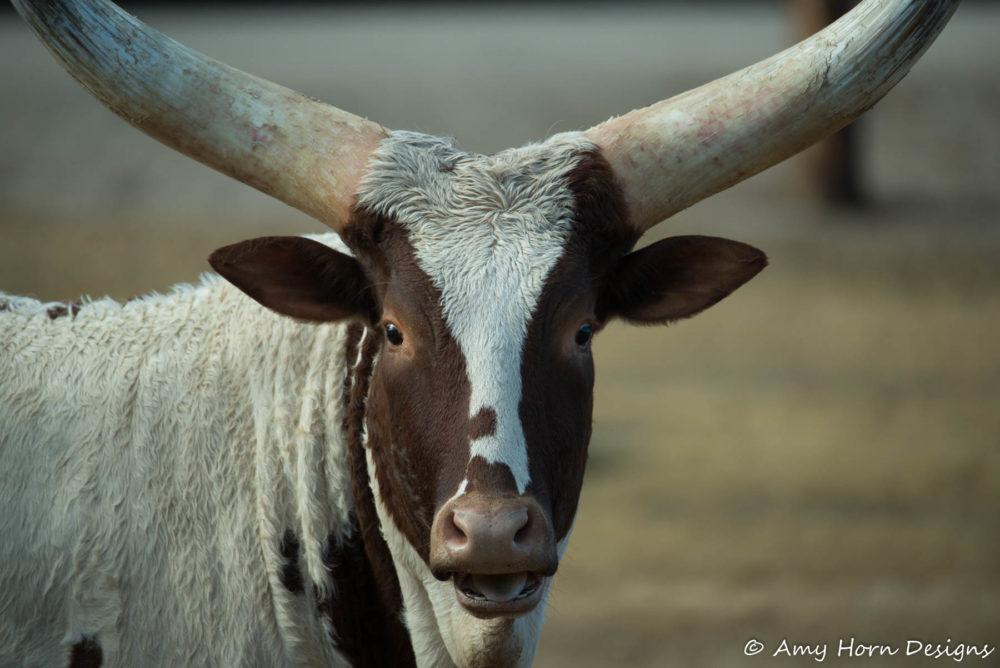 Photo credit Amy Horn - Wildlife World Zoo