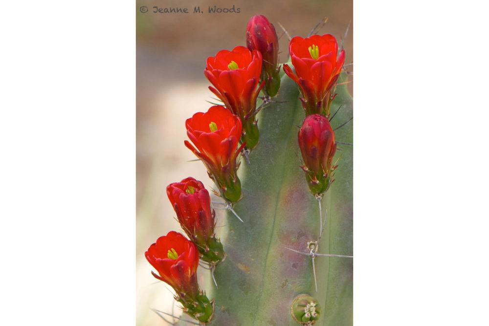 Photo credit Jeanne Woods - Macro Wildflowers