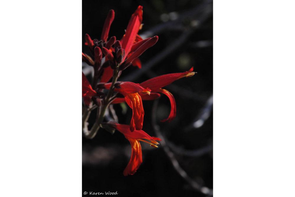 Photo credit Karen Wood - Macro Wildflowers