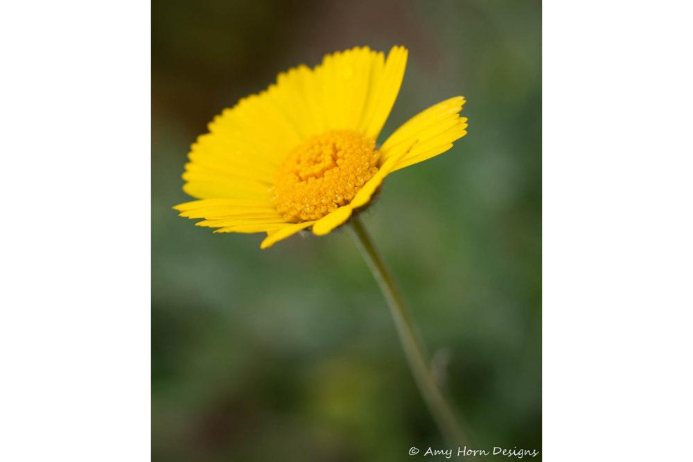Photo credit Amy Horn - Macro Wildflowers