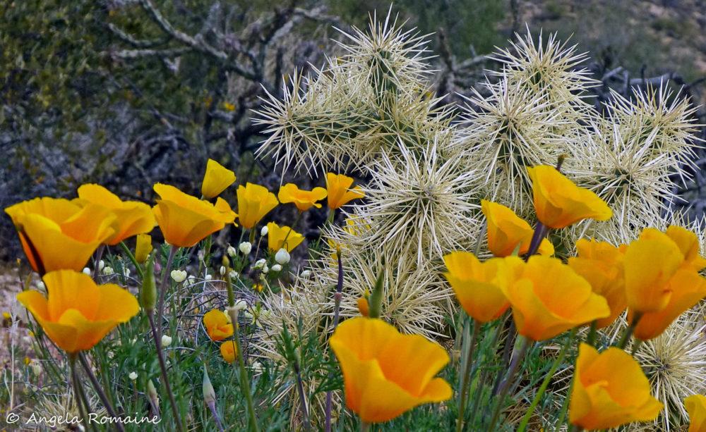Photo credit Angela Romaine - Macro Wildflowers