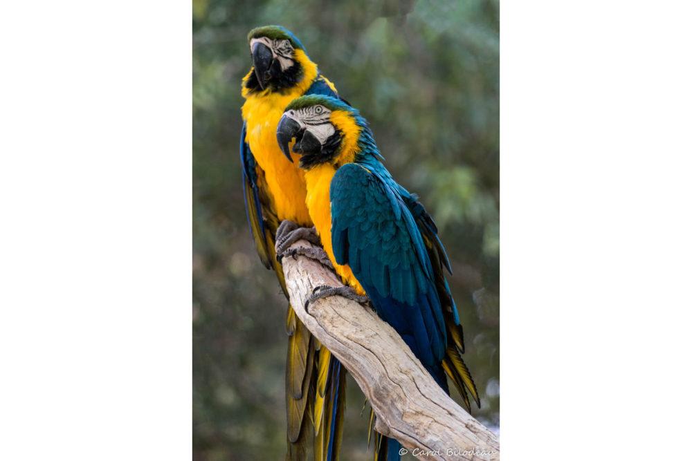 Photo credit Carol Bilodeau - Wildlife World Zoo
