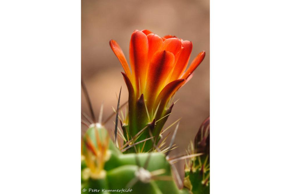 Photo credit Peter Kummerfeldt - Macro Wildflowers