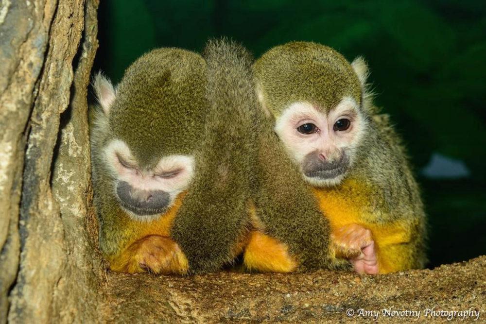 Photo credit Amy Novotny - Wildlife World Zoo