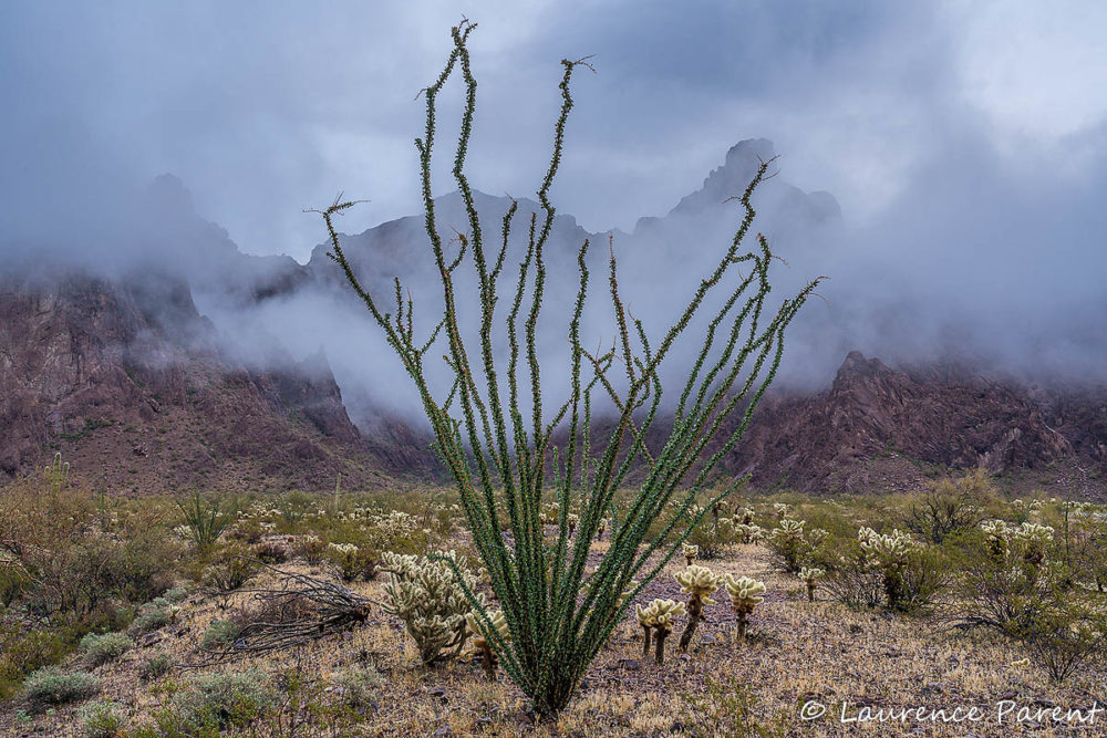 Kofa Mountains Photo Workshop