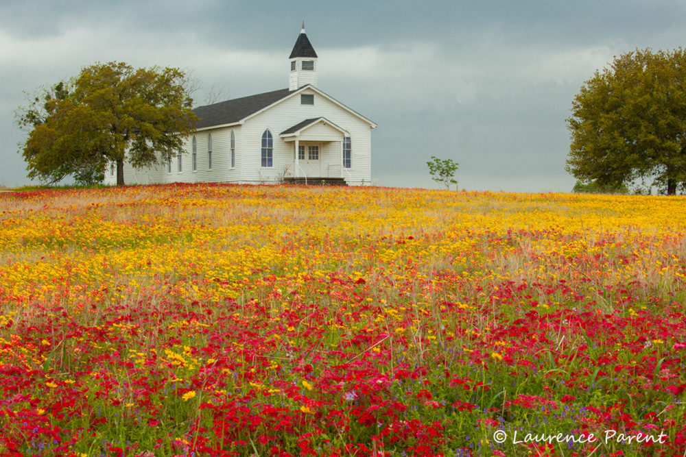Texas Hill Country & Wildflower Photo Workshop
